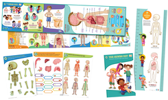 LeapFrog LeapReader Interactive Human Body Discovery Set | Language Arts / Reading