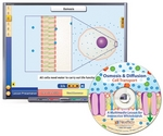 Image Osmosis & Diffusion: Cell Transport Multimedia Lesson