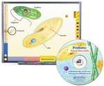 Image Protists: Pond Microlife Multimedia Lesson